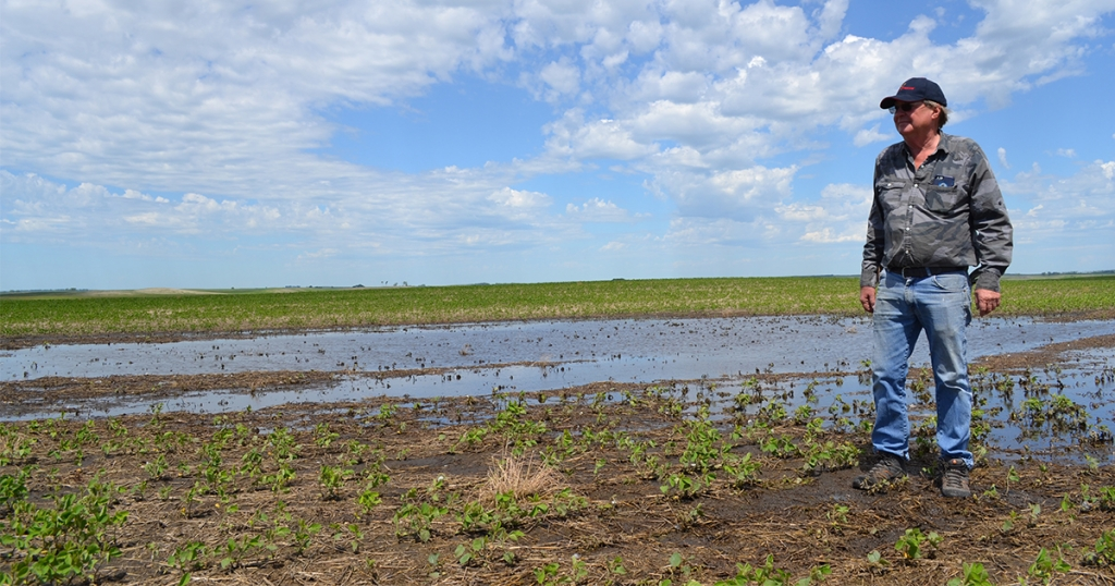Using Delta's successful Working Wetlands Program as a blueprint, the NRCS has launched the Prairie Pothole Water Quality and Wildlife Program