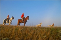 South Dakota Prairie Chickens and Sharptailed Grouse by Horseback