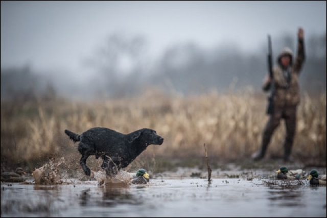 Know Your Sporting Dog's Individual Nutritional Requirements
