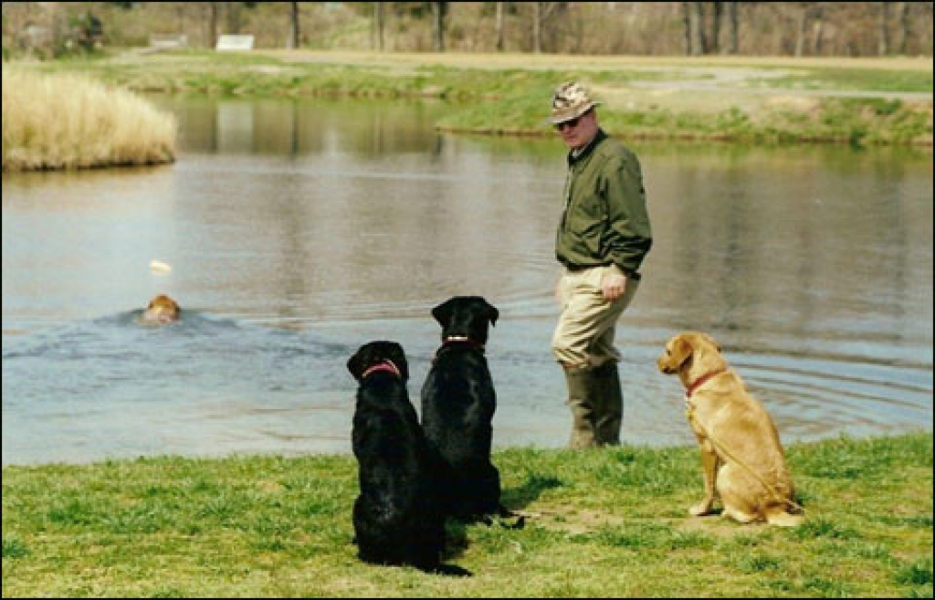 Experts Talk About the Risks and Work-Arounds of Training Your Sporting Dog in Summer Heat