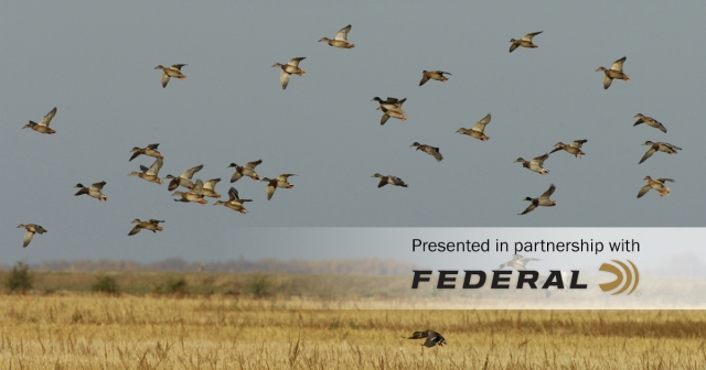 Delta Waterfowl Forecasts a Strong Fall Duck Flight