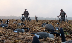 Family Perseverance Pays Off for Close Quarters Canada Goose Hunting