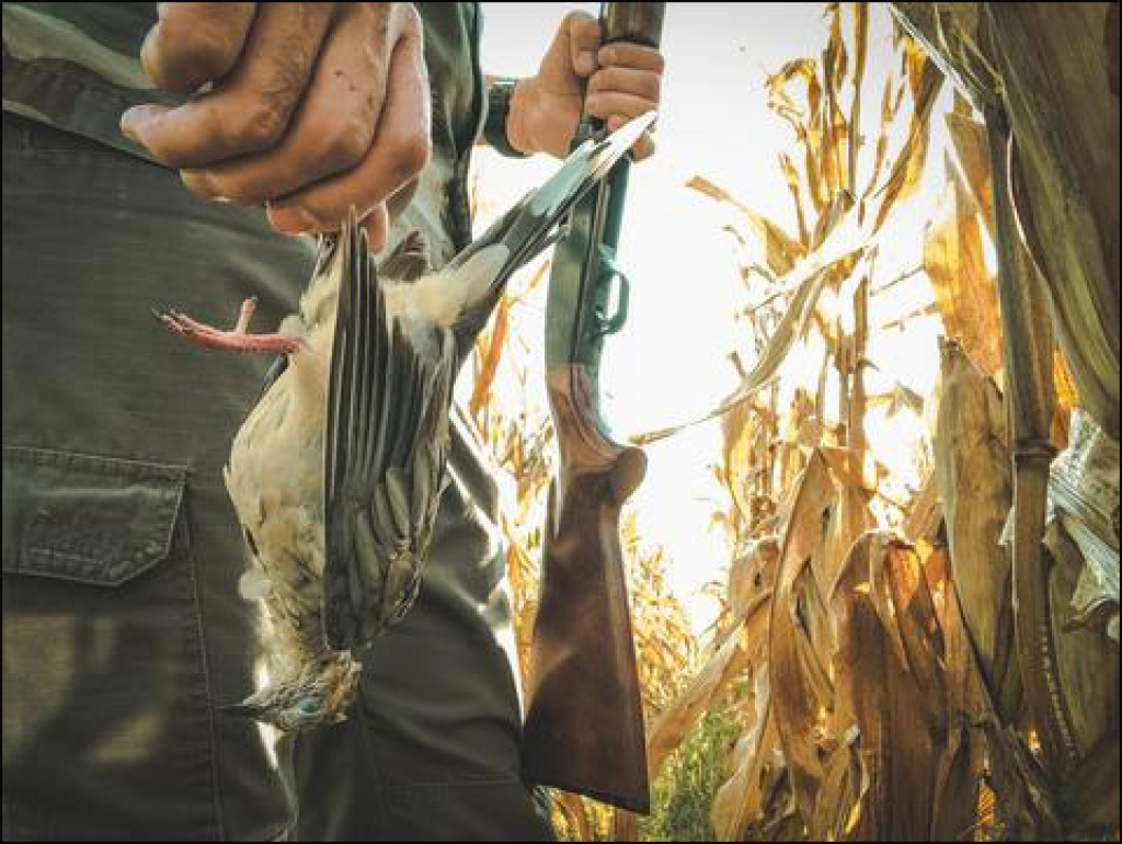 Dove Hunting with a Department Store Shotgun