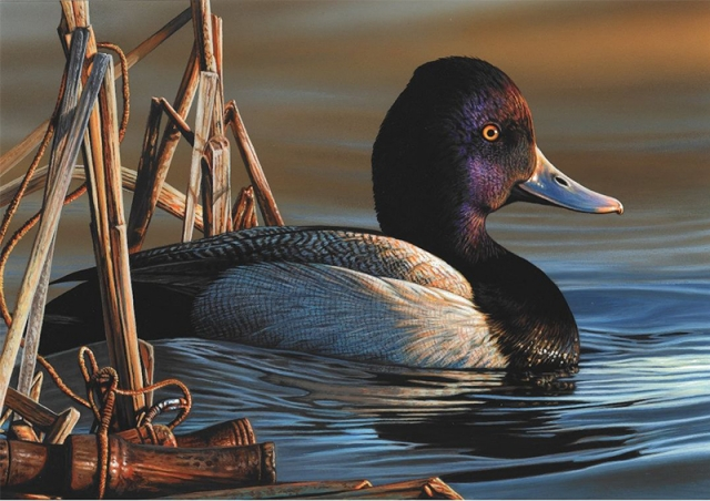 Delaware Artist Wins Federal Duck Stamp Contest